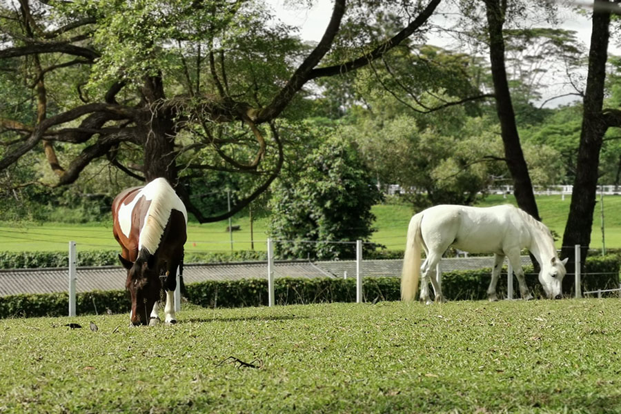 Two horses with green landscape.