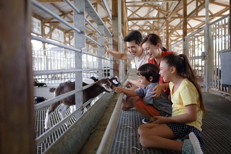 Hay dairies goat farm.